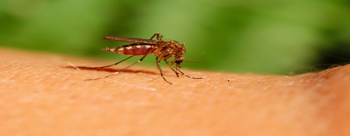 Are Your Trashcans Breeding Grounds for West Nile Virus?